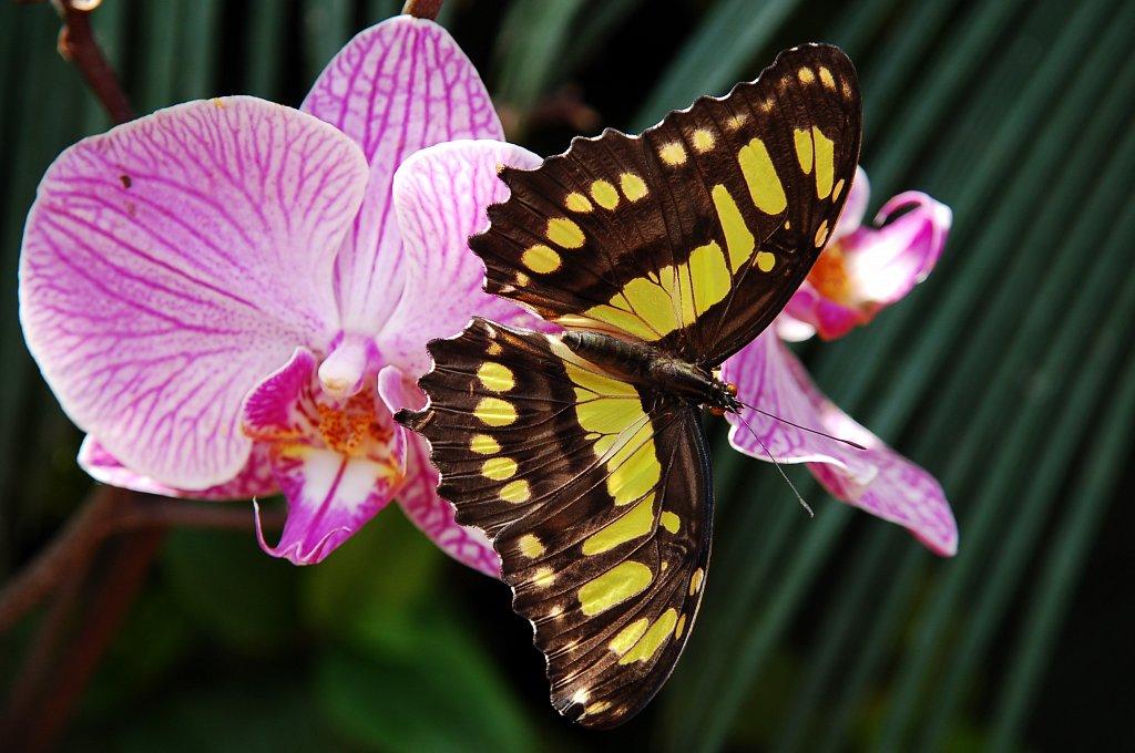 Alsace - Jardin des papillons